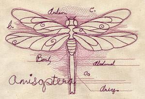 Dragonfly Diagram_image