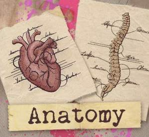 Anatomy (Design Pack)_image