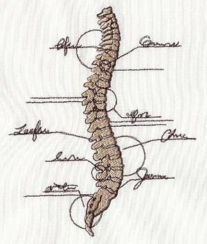Anatomical Spine_image