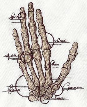 Anatomical Hand_image