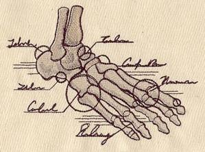 Anatomical Foot_image