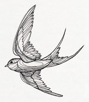 Engraved Swallow_image